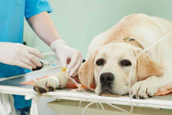 pronto soccorso veterinario roma